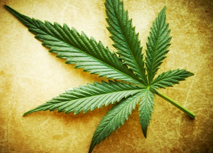 Cannabis leaf on grunge background, shallow DOF.